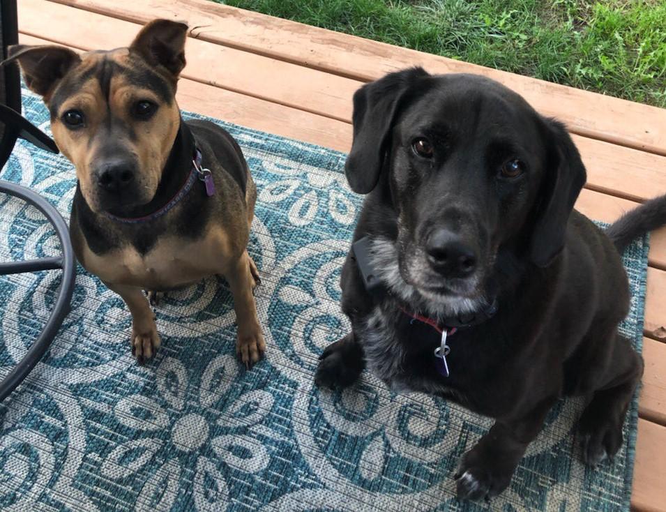 Valerie's Dogs